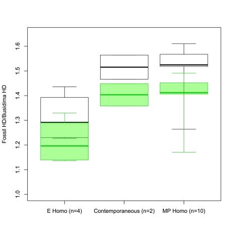 Ratio of a fossil Homo femur head diameter (HD) divided by Busidima's HD. E Homo = early Pleistocene, Contemporaneous = WT 15000 and OH 28, MP = Middle Pleistocene Homo. White boxes are based on Ruff's Busidima HD estimate, green boxes are based on Simpson et al.'s estimate.