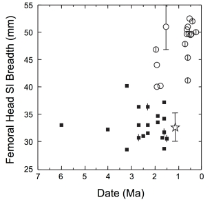 Fig. 3 From Ruff's (2010) reply. Australopiths (and Orrorin) are squares and Homo are circles. Busidima's estimated femur head diameter is represented by the star and bar.