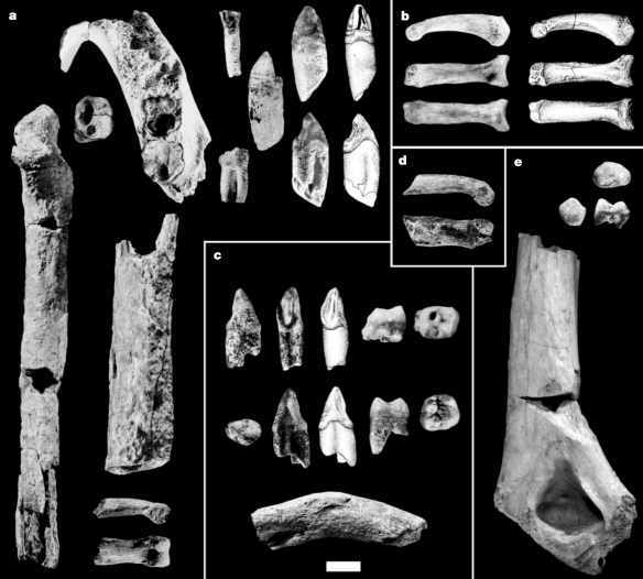 Can you spot a biped? Ardipithecus kadabba fossils (Fig. 1 from Haile-Selassie, 2001).