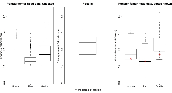 Hip joint size variation in living African apes (left and right) compared with fossil humans (genus Homo older than 1 mya, center). Each plot is scaled to show the same y-axis range. On the left are ratios of max/min from resampled pairs from each species (sex not taken into account). On the right are ratios of male/female from resampled pairs from each species. The red dots on this plot are the medians for max/min ratios (the thick black bars in the left plot). The center plot shows ratios of Homo/Gona.