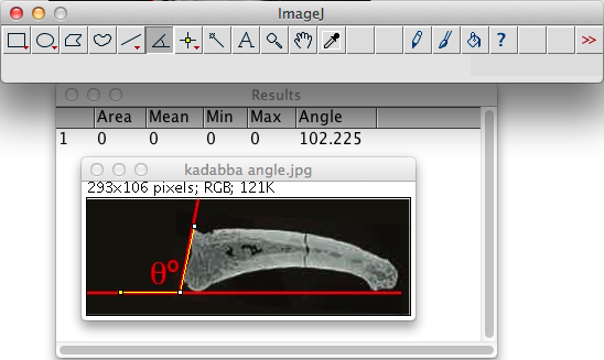 Measuring the dorsal canting of the AME-VP-1/71 proximal joint surface, using ImageJ.