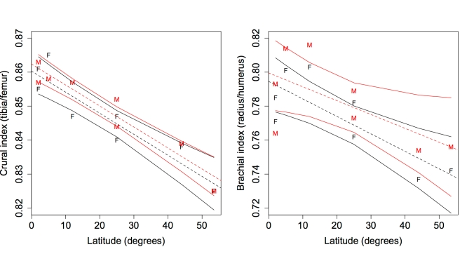 Left: Crural index (tibia length/femur length) related to latitude, as a proxy for climate. Right: Brachial index (radius length/humerus length) plotted against latitude. Data from Kurki et al. (2008). Black=female, red=male. Dashed lines are  regression slopes for each sex, and solid lines indicate the 95% confidence limits of the regression lines.