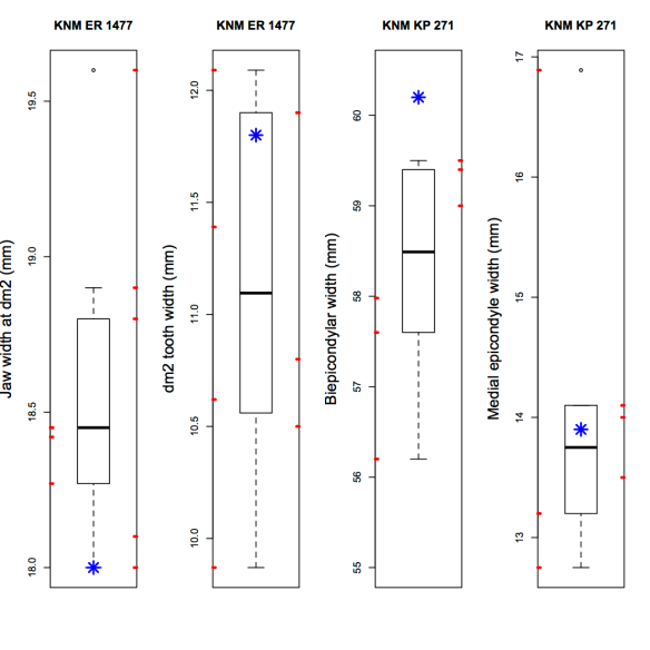 Boxplots showing participants' data, for two measurements on each of the fossils. The blue stars mark the published values. The red rugs on either side indicate measurements taken on the scans (left side) or printed casts (right).