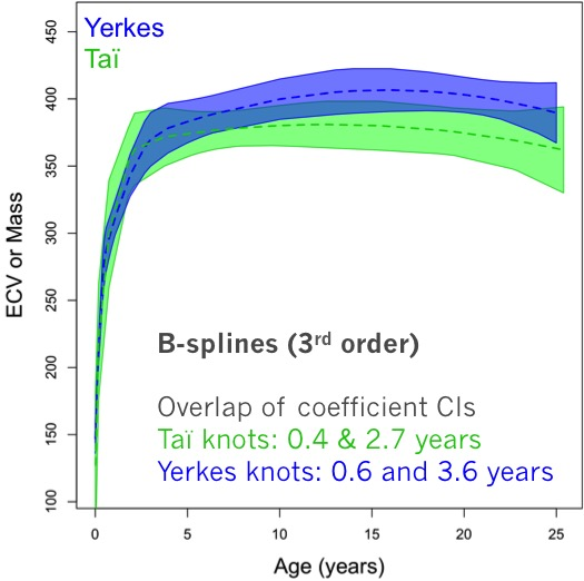 B-splines describing the relationship between ECV (or brain mass) and age in the TaÏ (green) and Yerkes (blue) data. Although resampling identified different knots for each sample, the regression coefficients are not significantly different.