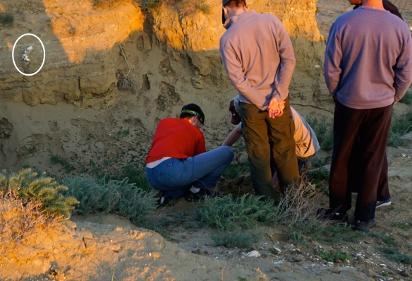 Digging out the skull on the west bank, right across from the lumber spine on the east face. The different soil layers (