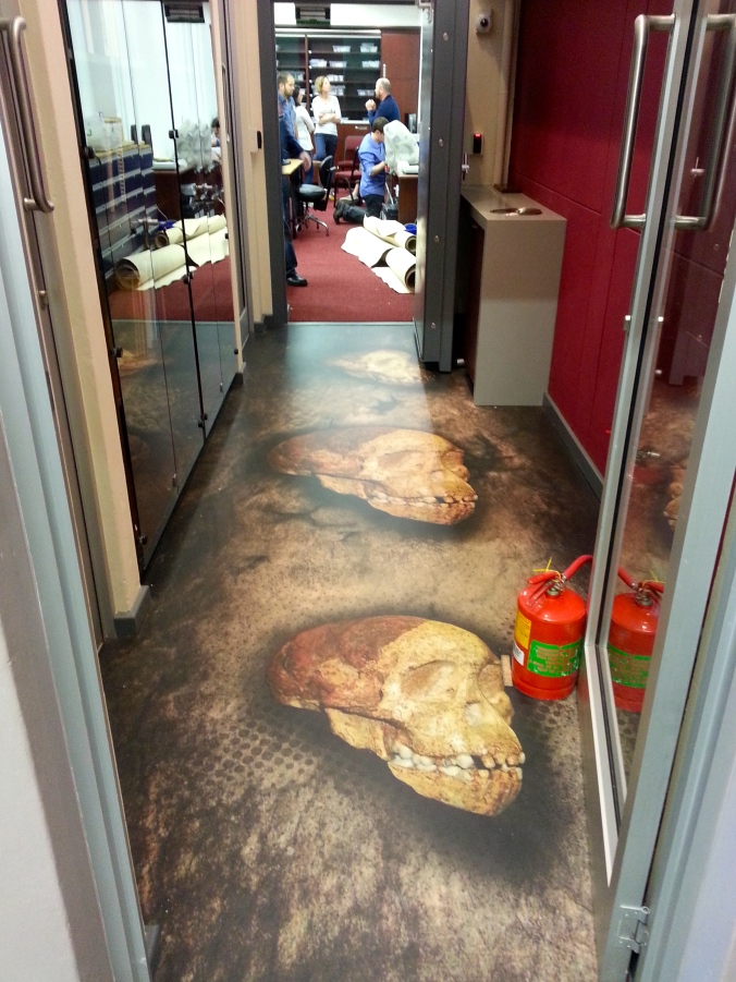 Taung was such an important discovery, you can now walk across it as you enter the fossil collections at Wits University.