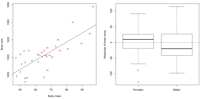 Brain-body allometry in our classroom. Males and females in our classroom do not seem to deviate appreciably from a common pattern of allometry.