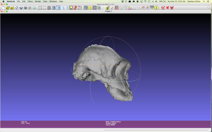 Maximum cranial length in Australopithecus boisei specimen KNM-ER 406.