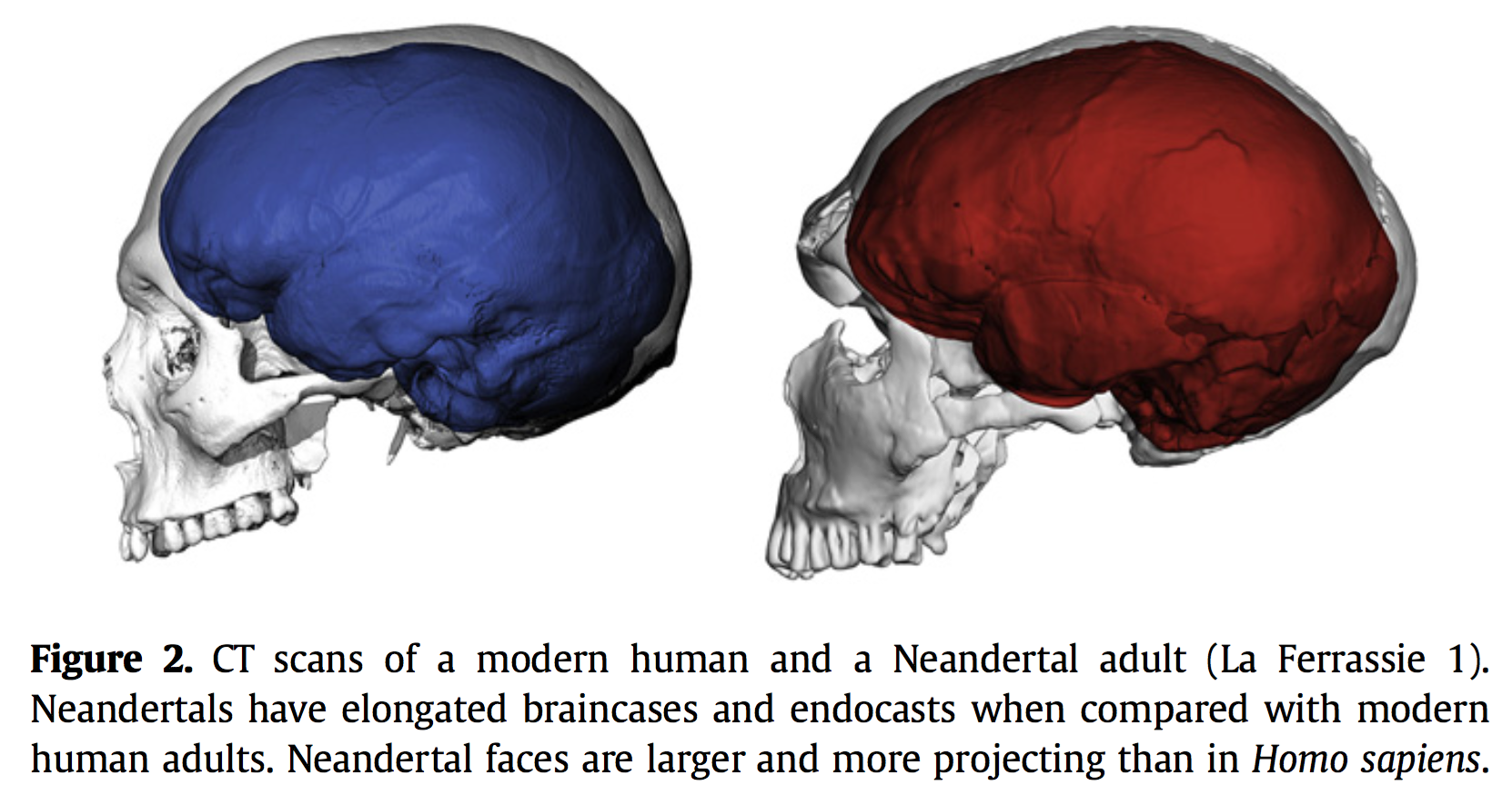 relationship between modern humans and neanderthal essay The date of interbreeding between neandertals and to interbreeding between neandertals and modern humans is the relationship between modern humans.